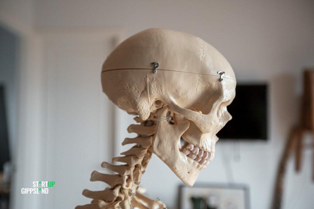 Startup Gippsland Kerstyn Ludlow Amazing Anatomy Xander the skeleton